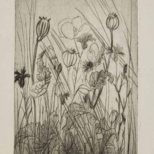 """Barbara Leighton """"Poppies"""" Etching, N.D."""