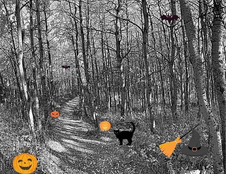 image of spooky forest with halloween characters like pumpkins, black cats, bats and a witch hat and broom along a path