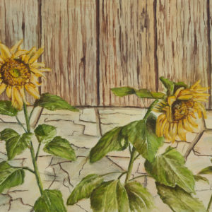 "Kirsten Jensen ""Sunflower"" Watercolour, 1981"